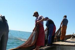 """Проектът """"Делфини и хора – съжителство в морето"""" на Сдружение за дива природа Балкани е опит да се примири конфликта на рибарите с делфините. Акустични репелентни устройства, т.нар. пингъри, отблъскват делфините със звук и по този начин опазват мрежите и"""