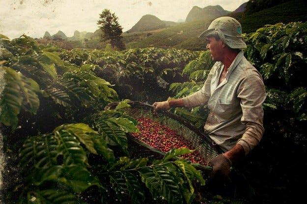 Във Великобритания създадоха гориво от кафе