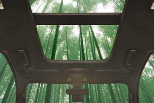В конструкцията на автомобили Ford ще има бамбук