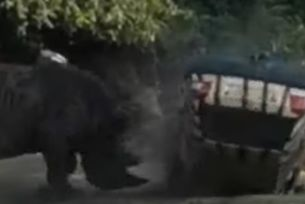 Разгневен носорог разби автомобил