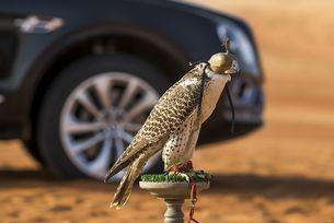 Bentley Bentayga вече е готов за лов на соколи