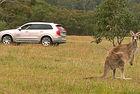 Автомобили Volvo разпознават кенгуру на пътя