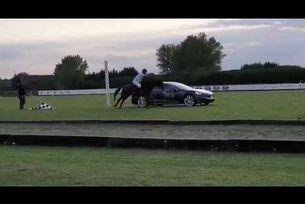 Tesla Model S премери сили в надпревара с кон